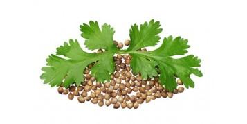 Koriandrova semena in listi